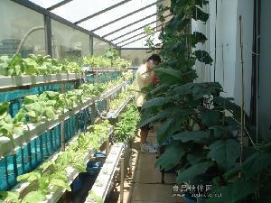 供应广东阳台水培蔬菜上班族的休闲时光时尚怡情休闲养性绿色无土栽培