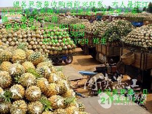 新鲜菠萝,产品直销